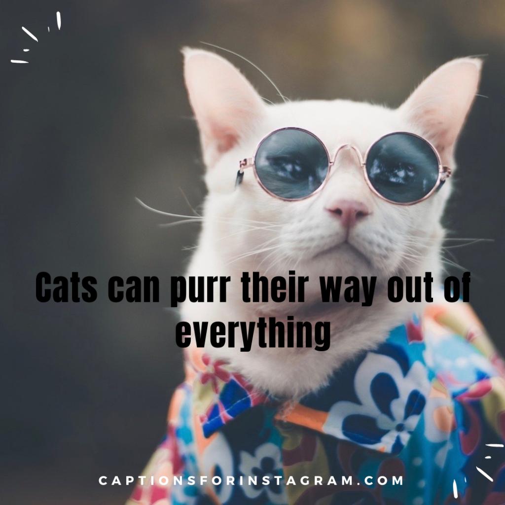 3-captionsforinstagram-funny-cats-captions-2