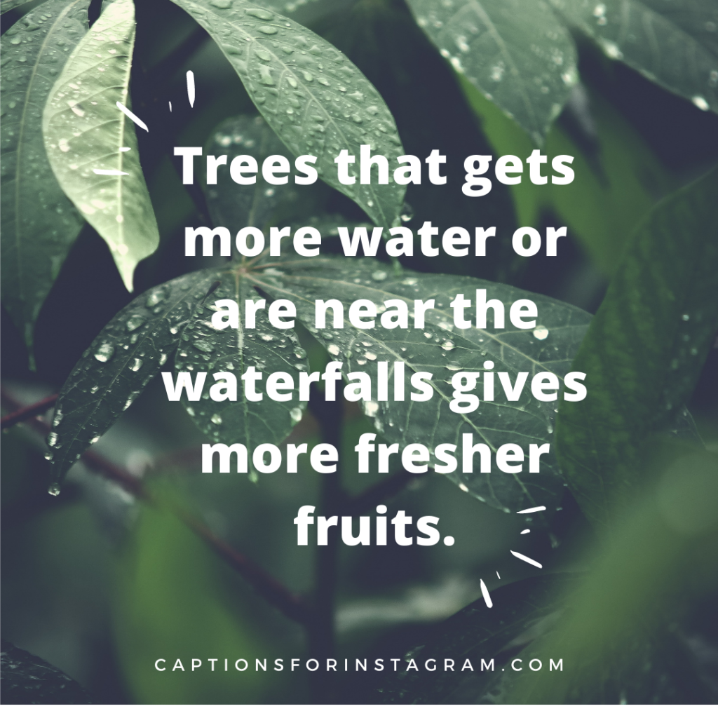 Trees that gets more water or are near the waterfalls gives more fresher fruits - Best Instagram Caption For Nature Beauty