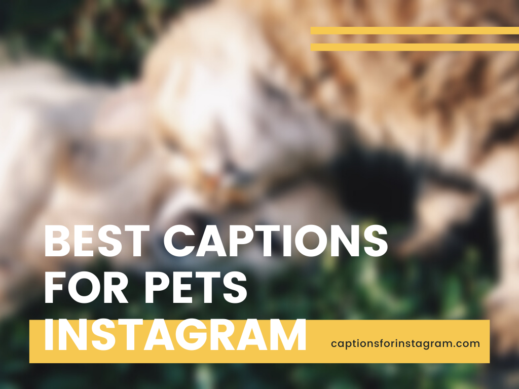 Best Captions for Pets Instagram, Whatsapp and Snapchat