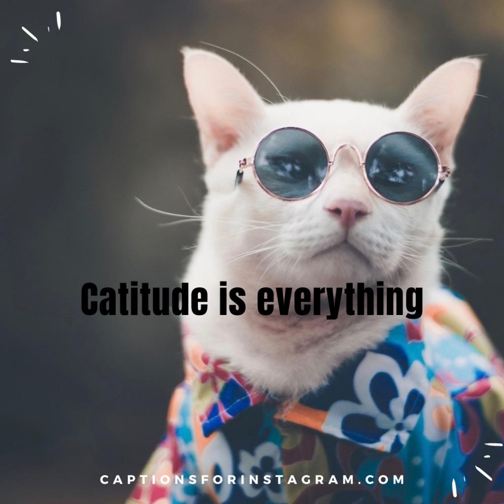 3-captionsforinstagram-funny cats-captions-1-