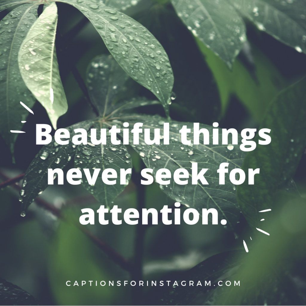 Beautiful things never seek for attention -Best Nature Captions For Instagram.