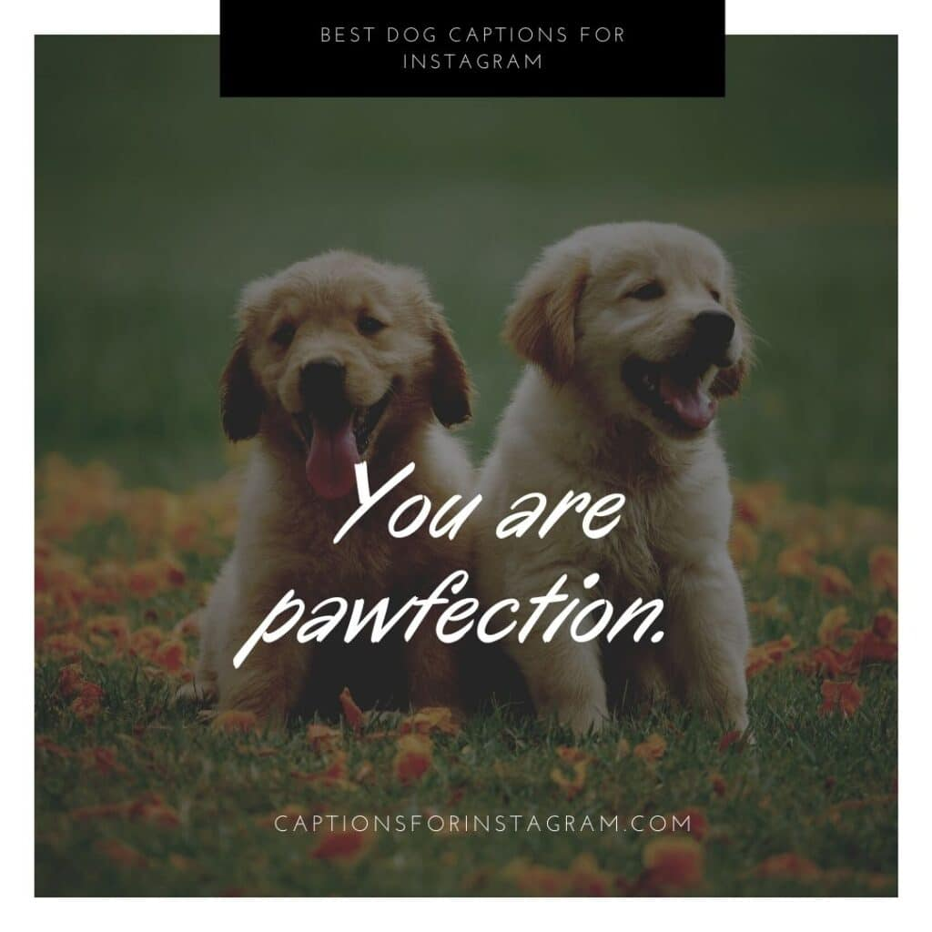 You are pawfection. Cute dog captions for instagram